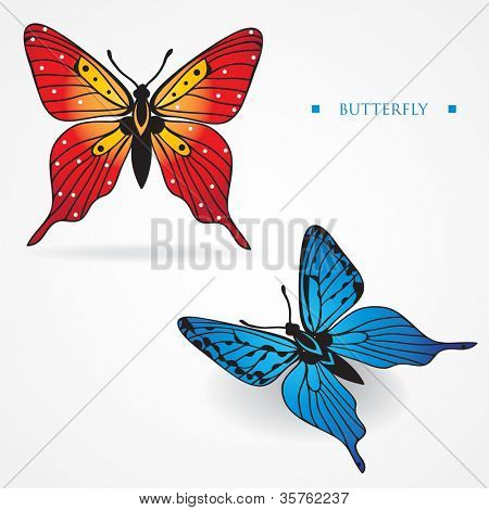 Two different multicolored butterflies on white background