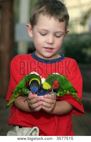 Boy Holding Two Lorakeets In His Hand And Feeding Them From A Cup