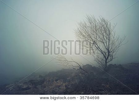 Dark spooky landscape with fog and one tree