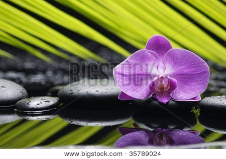 Single orchid with palm leaf and zen stone reflection