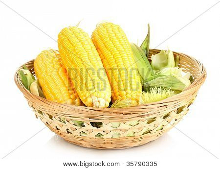 Fresh corn cobs in basket isolated on white