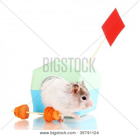 Cute hamster near house isolated white