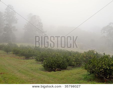 Orchard in the Mist 3