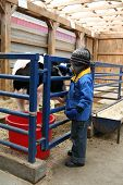 Young Child Looking At A Cow In Its Pen