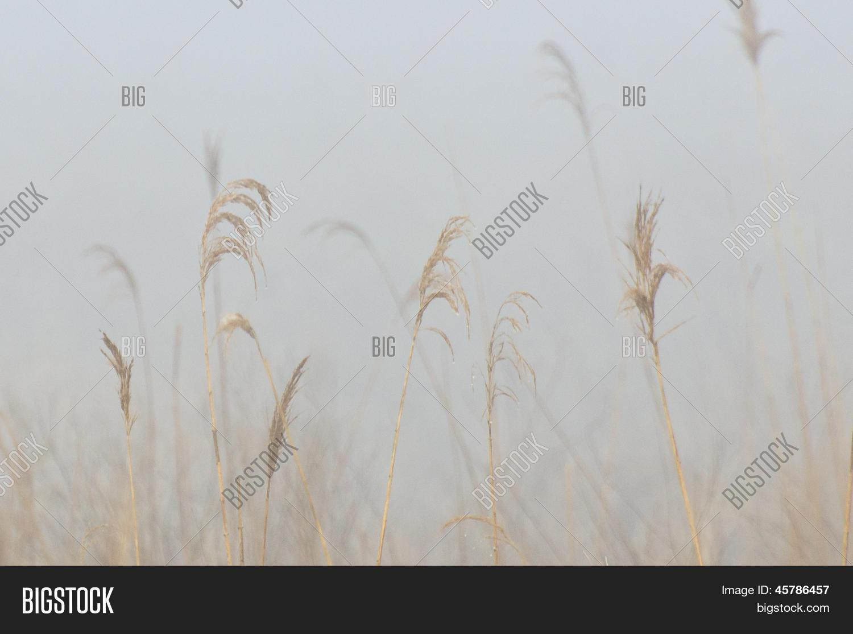 2f4da2c1fd http   www.bigstock.com.br image-45786439 stock-photo-silverthread ...