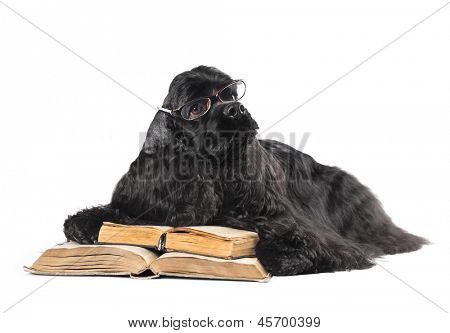 dog in glasses and book