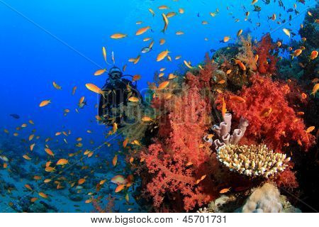 Scuba Diver explores coral reef with tropical fish underwater