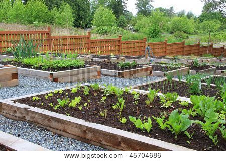 Community vegetable garden boxes.