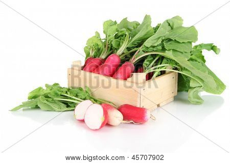 Small garden radish with leaves isolated on white