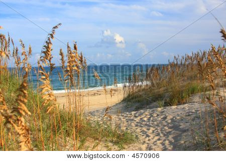 Outer Banks Strand