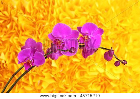 Gentle beautiful orchid on yellow background