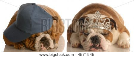 Bulldog With Tiara Bulldog With Ball Cap