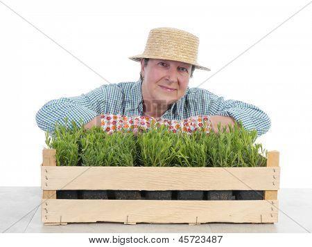 Female senior gardener wearing straw hat posing over aspic seedlings in wooden crate shot on white