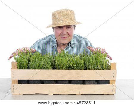 Female senior gardener wearing straw hat smelling aspic seedlings in wooden crate shot on white