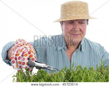 Female senior gardener wearing straw hat forming aspic seedlings using garden shears