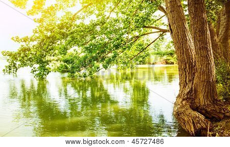 Beautiful river landscape, reflection of big tree in calm water, forest nature, bright yellow sunlight, peaceful scene of spring season lake, selective focus