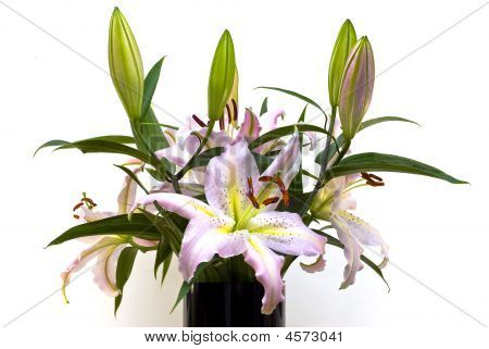 Lilys In Vase