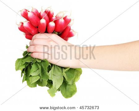 Small garden radish with leaves in hand isolated on white