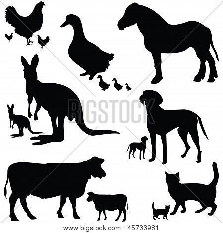Big Collection Of Animals