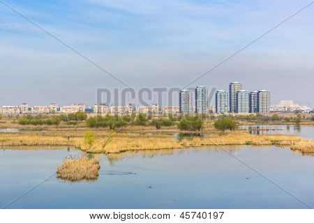 Cityscape With Aquatic Ecosystem