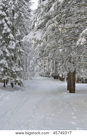 Winter mountain path in the forest