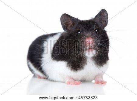 Hamster. Close-up Portrait
