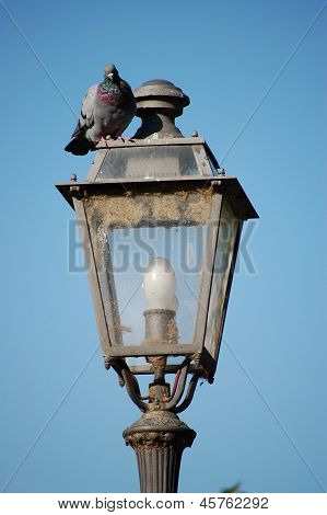 light bulb and bird