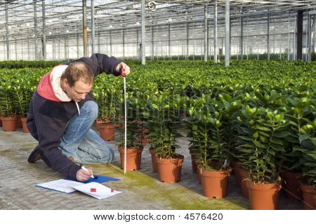 Measuring The Height Of Glasshouse Plants