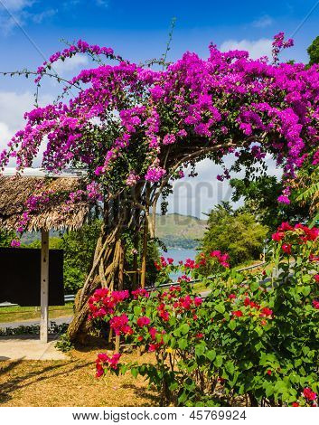 Arch Of Purple Flowers  In Thailand