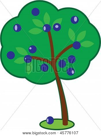 Cute Plum  Tree