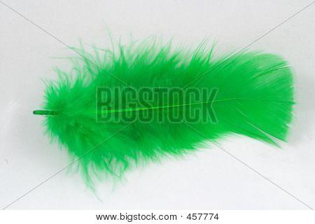 Grüne Feder