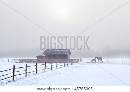 Horse On Winter Pasture In Misty Day