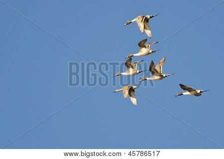 Norte-macáes voando no céu azul