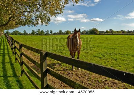 Horse In The National Stud In Ireland