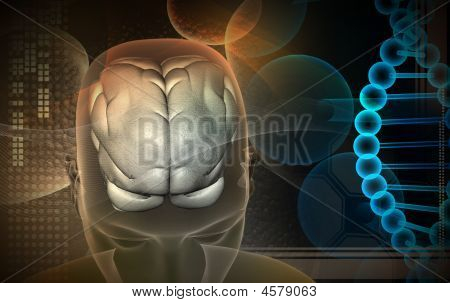 Human Brain And Dna
