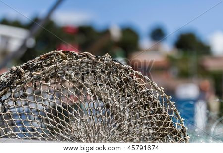 Close Up Of Fishing Traps