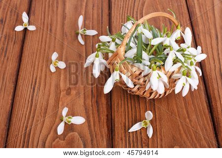 Snowdrops in a basket on the oak table