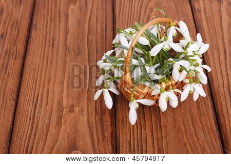 snowdrops in a wicker basket