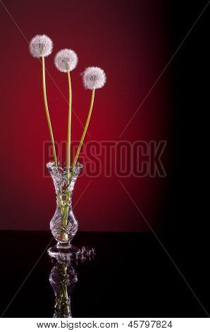 Dandelion Blowballs Red