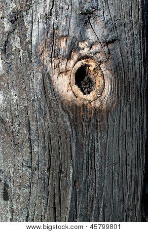 Charred Wood And Twig.