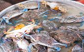 picture of blue crab  - Blue crab or Horse crab in market - JPG