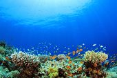 pic of biodiversity  - Underwater Coral Reef and Tropical Fish in Ocean - JPG
