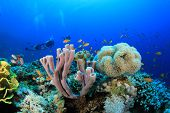 foto of biodiversity  - Scuba Diving over Coral Reef with Fish underwater in ocean - JPG