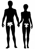 image of adam eve  - Editable vector silhouette of Adam and Eve - JPG