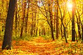 Beautiful landscape - autumn forest