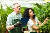 stock photo of greenhouse  - Workers examining plants in a greenhouse - JPG