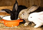 image of rabbit hutch  - Three different rabbits closeup in hutch close up - JPG