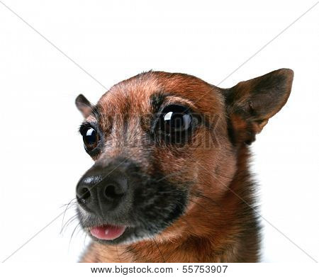 a wide angle shot of a dog's face