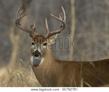 Cold Winter Day Buck