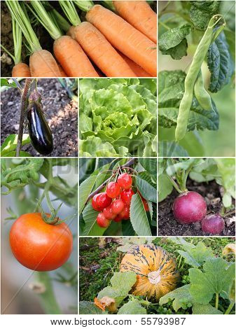 Homegrown garden products